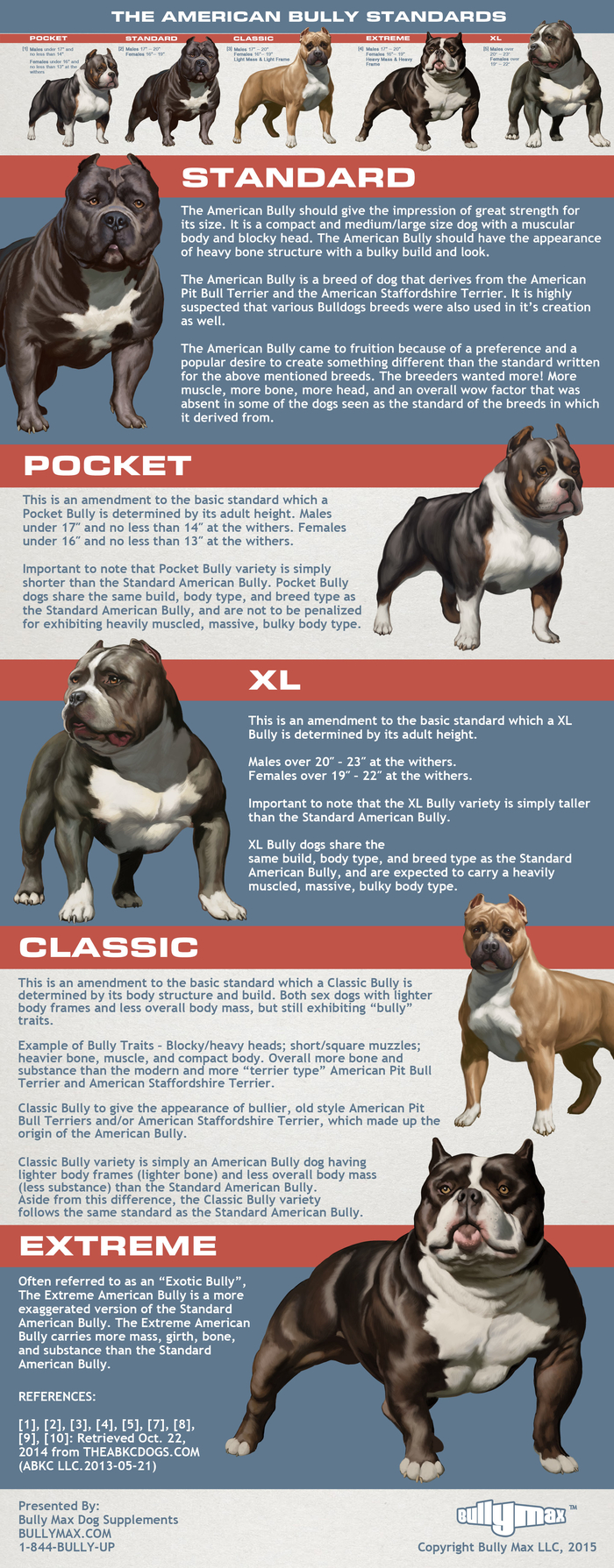 american bully classes infographic