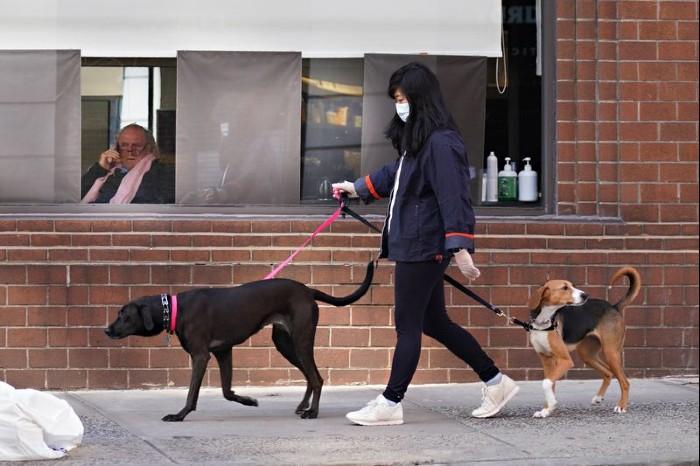 can i walk my dog during coronavirus lockdown