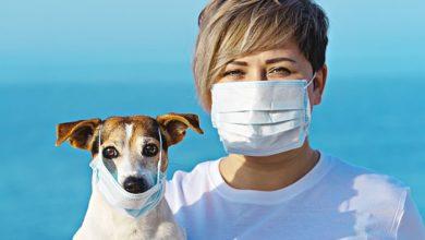 can dogs get coronavirus covid 19