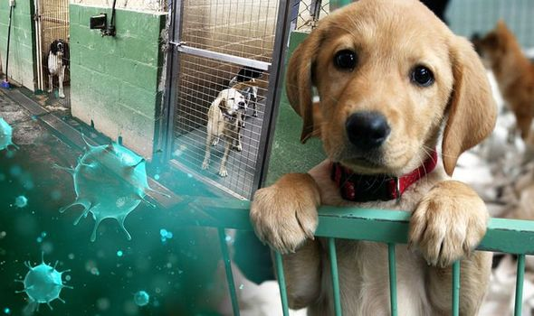 coronavirus in dogs - is it safe to put my dog in kennels