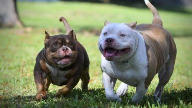socialization of dogs