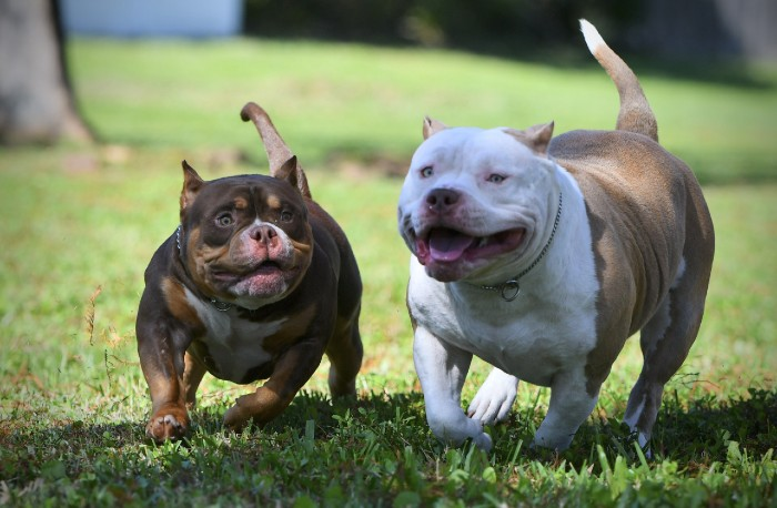 Photo of What Is Dog Socialization and Why Is It Important?