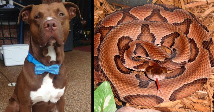 dog and snake bites
