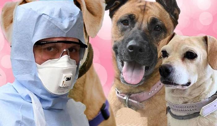 coronavirus on dogs