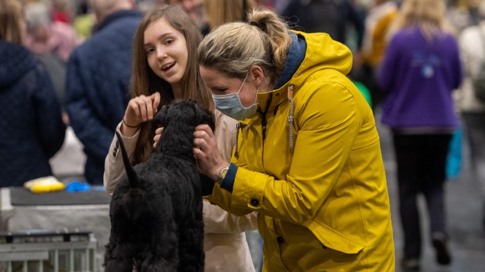 how to pet dogs during the coronavirus pandemic