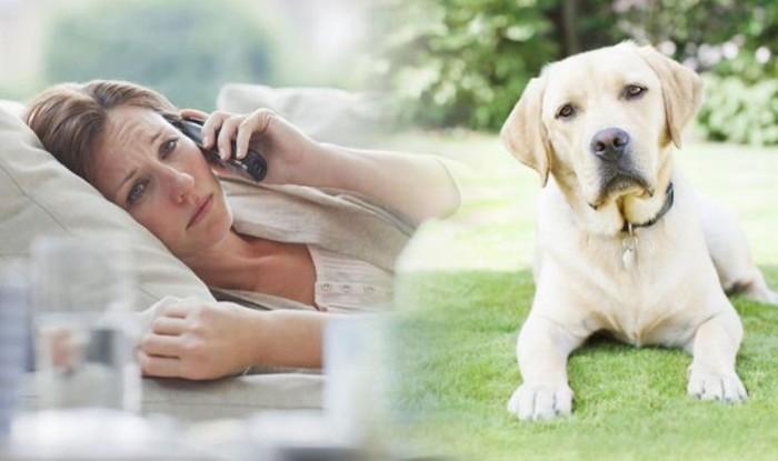 keeping your dog safe from coronavirus