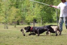 Photo of Exercising Your Dog: The Best Muscle Building Activities For A Fit, Healthy Dog