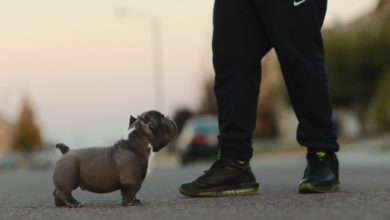 Photo of Choosing a Name for Your American Bully